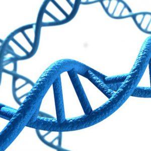Valutazione genomica INTERNAZIONALE